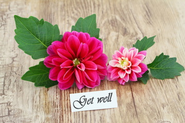 Get well card with pink dahlia flowers