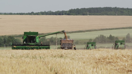 The harvester fills the truck with grain in hot weather