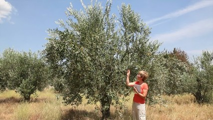Female agronomist expert inspect quality of olive tree orchard