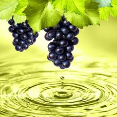 frische Weintraubgen