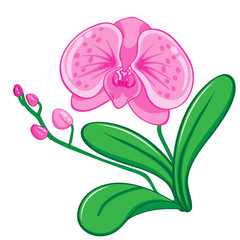 Illustration of orchids flower vecter
