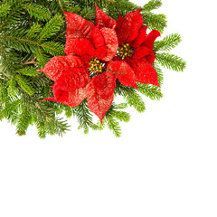 christmas tree branch with red poinsettia flower