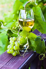 white wine in vineyard