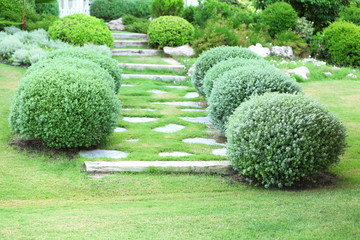 Beautiful lush bushes in garden