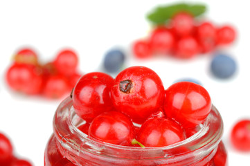 Collection of delicious fresh red currant berries