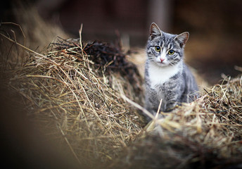 Beautiful and joyful cat