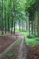 Waldweg_2