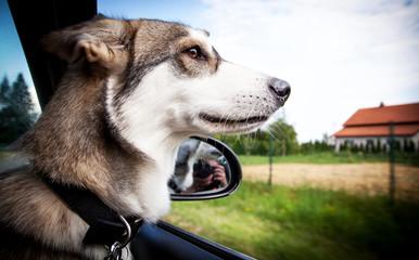 Doggy vacation