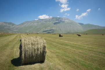 Agricultural field with hay rolls, Castelluccio, Italy
