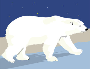 Polar Bear with Background