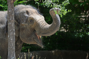Young Elephant Grabbing Branch