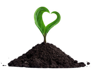 Green sprout with heart-shaped leaves, growing