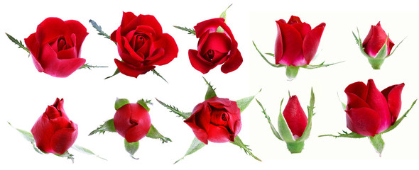 Set of roses isolated on white