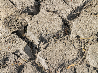 Parched dry earth with dried leaves and twigs in cracks