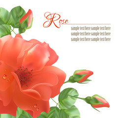 Flower Rose Vector Background