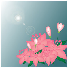 Vector Pink lilies on the blue background