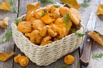 fresh forest chanterelle mushrooms in a basket on wooden table