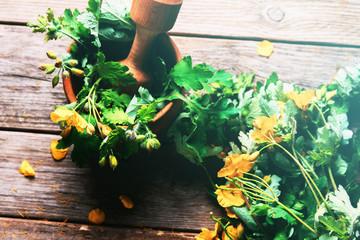 Celandine herbal