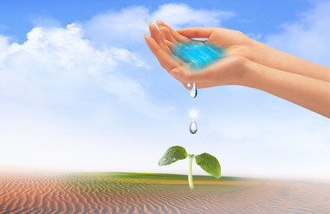 water in hands above plant