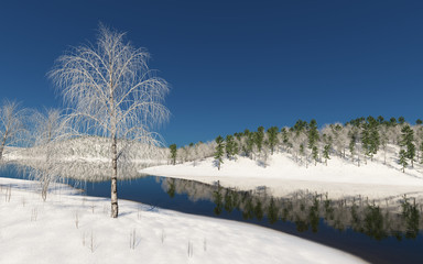 Birch on a pond in winter.