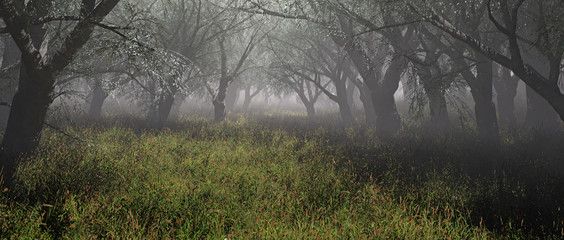 Misty forest with grass. Panoramic shot.