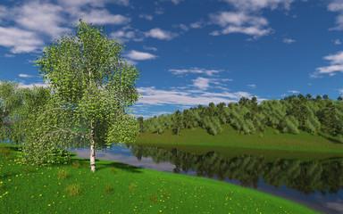 Birch on a pond in spring.