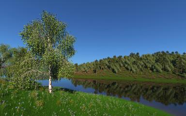 Birch on a pond in summer.