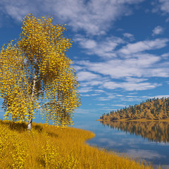 Birch on a pond in autumn.