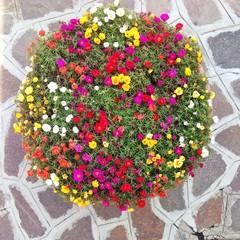 Blumenkübel von oben