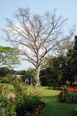 Garden in Thailand