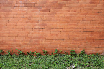 brick wall and green leaf ivy