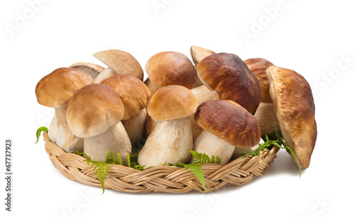 Mushrooms - 67737923
