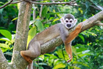 monkey rest on the tree