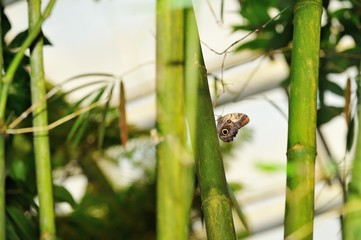 Butterfly on bamboo stalk