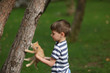 Camping near a tree on a green lawn boy plays with a cat