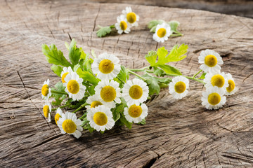 Chamomile. Organic flowers on wooden background