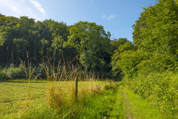 Footpath through meadow and trees in summer