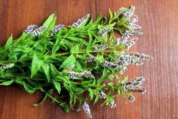 Mint flowers on the table