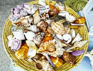 beautiful shell at market