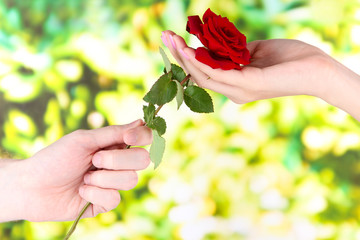 Man's hand giving a rose on bright background