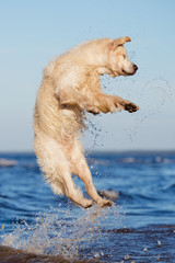 happy dog jumps out of water