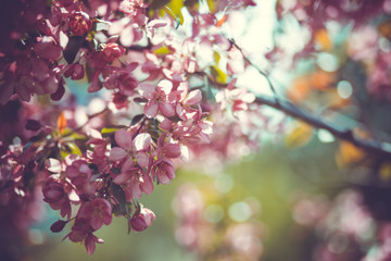Lovely cherry branch in a spring garden