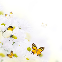 Spring bouquet of daisies and butterfly, floral background
