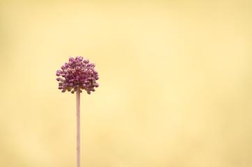 Flores Tranquilas