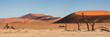 Panorama of the Sossusvlei - 67752549
