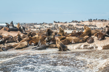 Seal Island near Cape Town South Africa