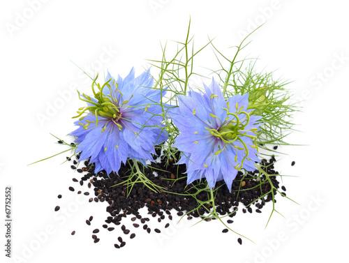 Tuinposter Bloemen Nigella sativa