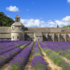 Abbey of Senanque and lavender