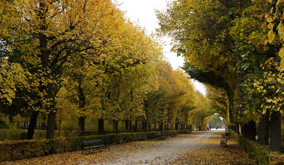 Autumn in Vienna