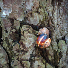 Snail on trunk